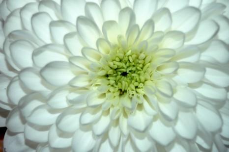 Flowering.